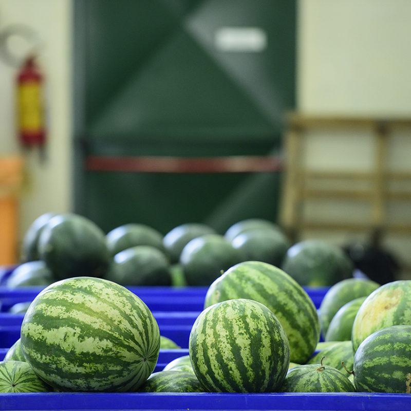 tharrosfruit-DSC_9117